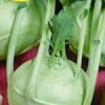 Семена кольраби