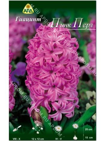 Гиацинт Пинк Перл (Hyacinthus Pink Pearl)
