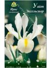 Ирис голландский Уайт Эксельсиор (Iris hollandica White Excelsior)