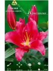 Лилия Крагганмо (Lilium oriental Cragganmore)