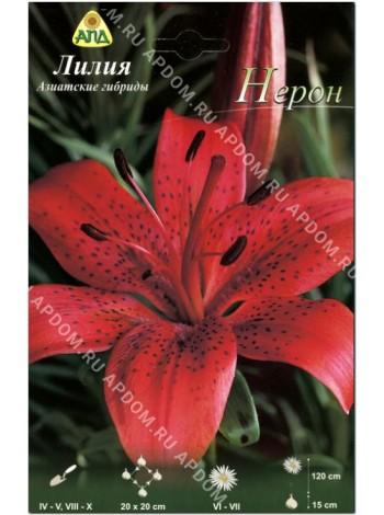 Лилия Нерон (Lilium asiatic Nerone)