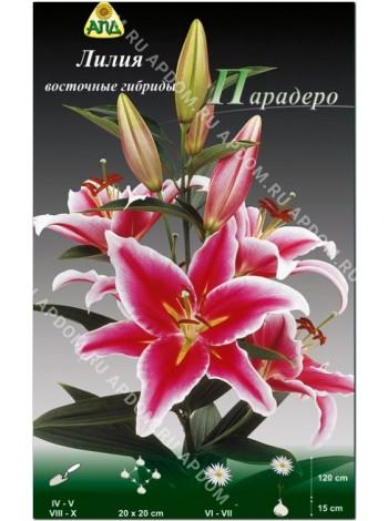 Лилия Парадеро (Lilium oriental Paradero)