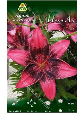 Лилия Пепл Ай (Lilium asiatic Purple Eye)