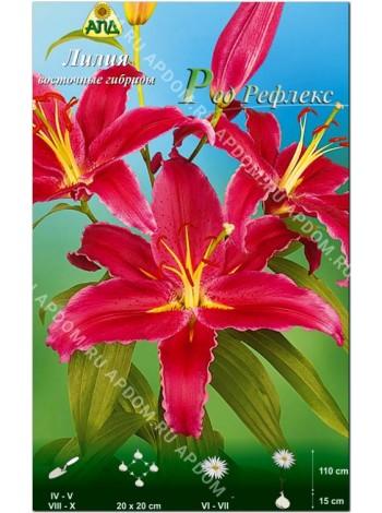 Лилия Ред Рефлекс (Lilium oriental Red Reflex)