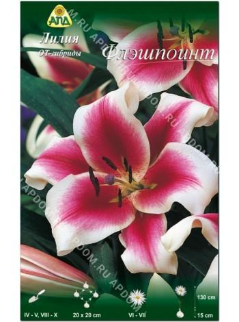 Лилия Флэшпоинт (Lilium OT Flashpoint)