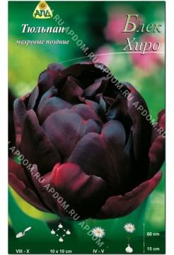 Тюльпан Блек Хиро