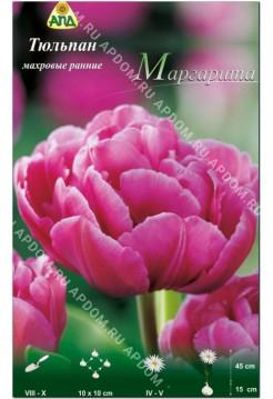 Тюльпан Маргарита