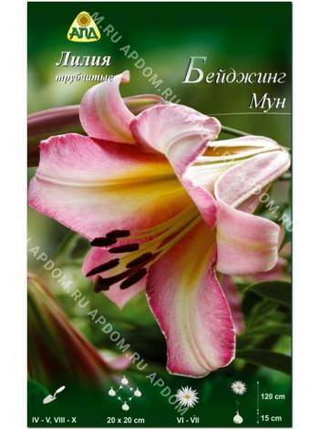 Лилия Бейджинг Мун (Lilium trumpet Beijing Moon)
