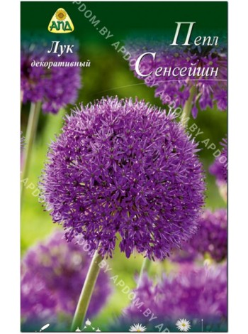 Лук декоративный Пепл Сенсейшн (Allium aflatunense Purple Sensation)