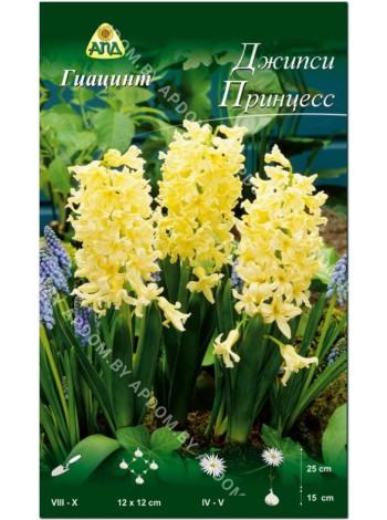 Гиацинт Джипси Принцесс (Hyacinthus Gipsy Princess)