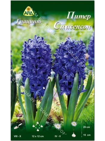 Гиацинт Питер Стивенсон (Hyacinthus Peter Stuyvesant)