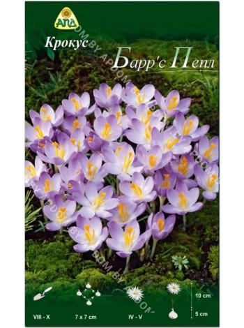 Крокус Барр'с Пепл (Crocus tommasinianus Barr's Purple)