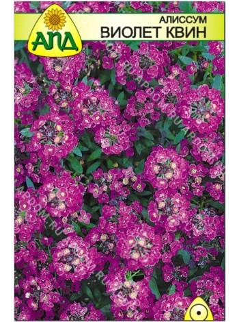 Алиссум Виолет Квин (Alyssum maritimum)