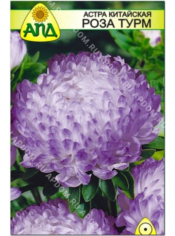Астра китайская Роза Турм (Callistephus chinensis)