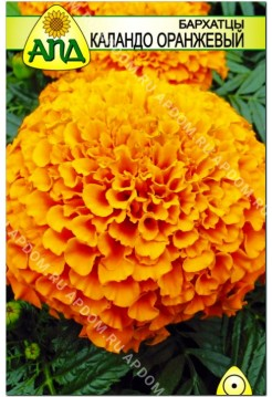 Бархатцы Каландо оранжевый