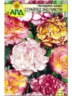 Гвоздика Шабо Страйпед энд Пикоти (Dianthus caryophyllus)